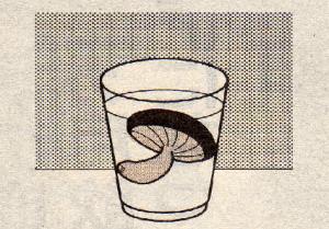 シイタケ水2