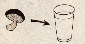 シイタケ水